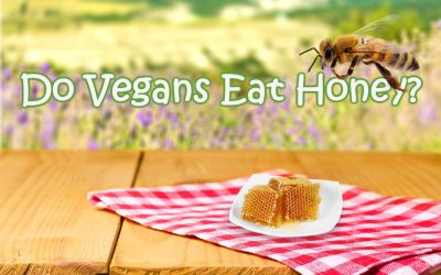 #1 Reason Why Vegans Do Not Eat Honey